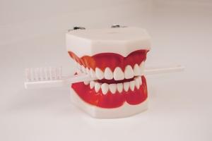 Zahnarztpraxis Dr. Silke Rösch – Gebiss